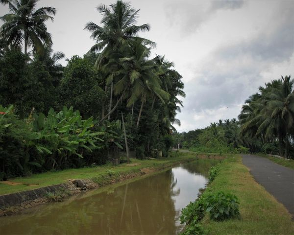 Banana Tree Coconut Trees Eyecatching Gods Own Country Green Color Nature Nature's Wonder Peace Plantains Scenery Serenity