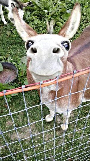 Happy donkey!!