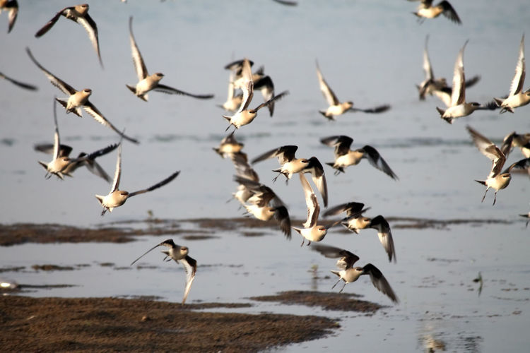 Flying birds River Water Reflections Bird Animal Wildlife Animal Body Part Animal Animals In The Wild Flying Nature Water Outdoors No People Day