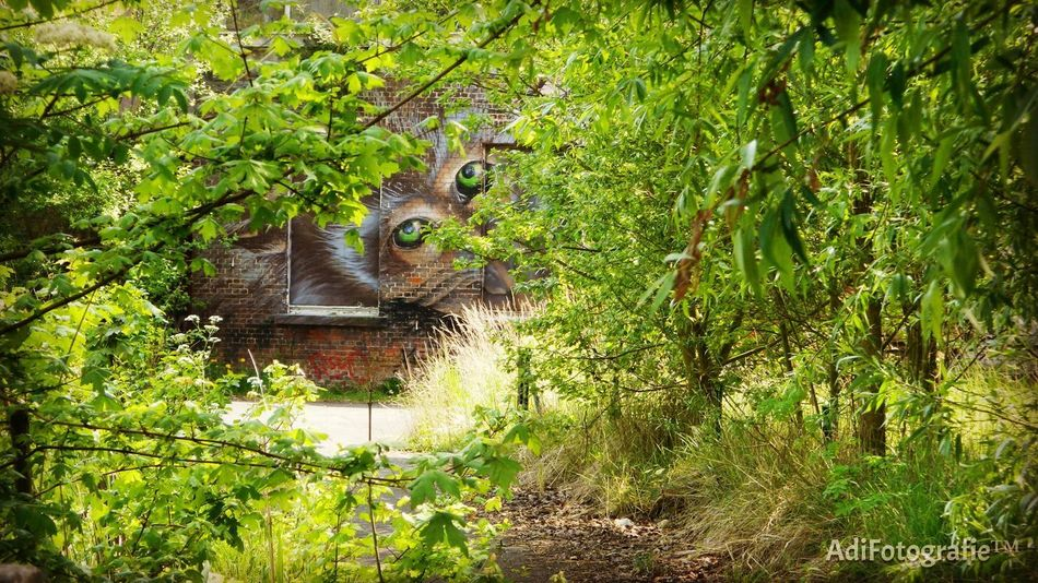 Animals In The Wild One Animal No People Beauty In Nature Green Color Outdoors Doel Belgium Doel België Belgium Belgique Belgie Beauty In Nature EyeEmNewHere