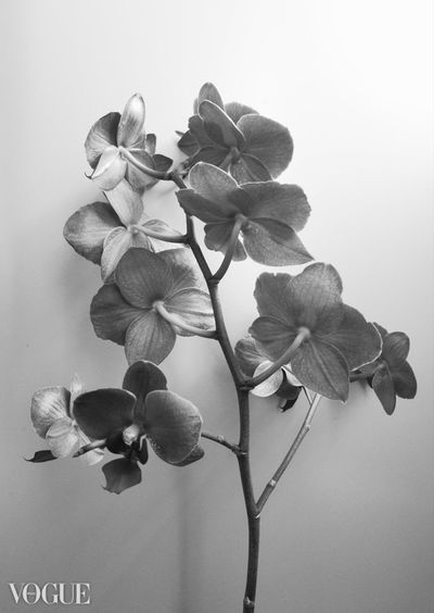 Nature Nature Photography Eyemphotography Photovogue Vogue Portfolio Orchid Flower Flowers Flower Head Blackandwhite Monochrome White Background Softness