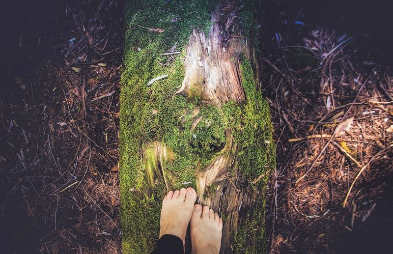 Low section of woman standing on log in forest