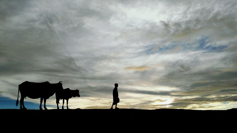 Silhouette Boy And Cows Standing On Landscape Against Cloudy Sky