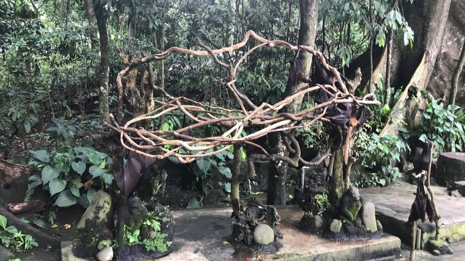 Bat Beauty In Nature Branch Forest Green Color Nature Plant Rock - Object Tree