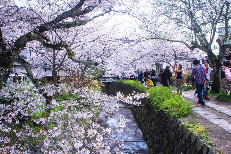 People Photographing Blooming Trees