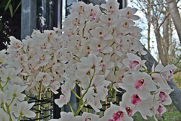 Streamzoofamily Orchids Orchid Obsession Flowerforfriends