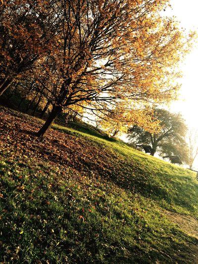 Autumn Leaves Autumn Autumn Colors Tree Garden Yard Leaves Yellow