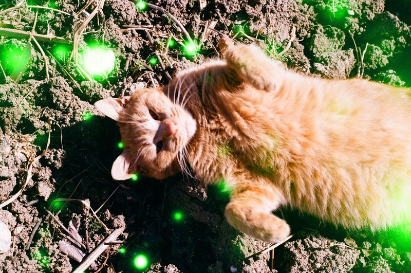 Animal Animal Themes Cat Domestic Domestic Animals Domestic Cat Feline Field Ginger Cat High Angle View Land Lying Down Mammal Nature No People One Animal Outdoors Pets Plant Relaxation Sleeping Vertebrate Whisker
