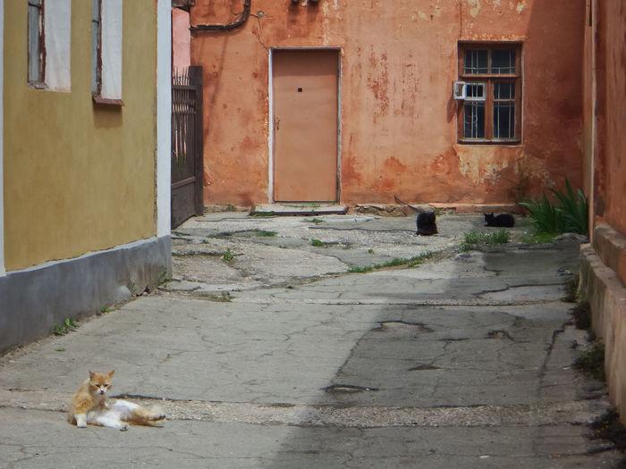 Cat walking on street against building