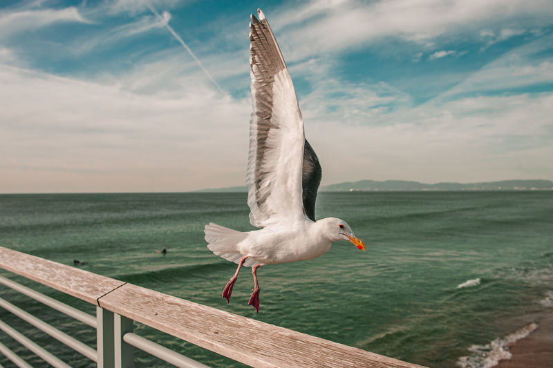Seagull flying over sea against sky