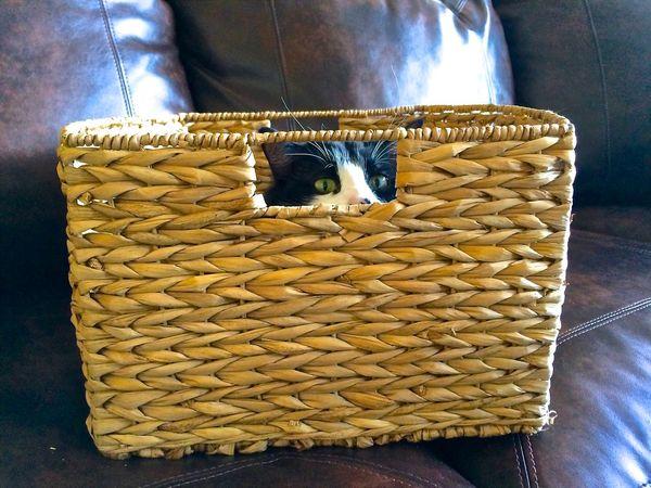 Animal Life Basket Weave Brown Cat Domestic Animals Home Interior Indoors  No People Peeking Through