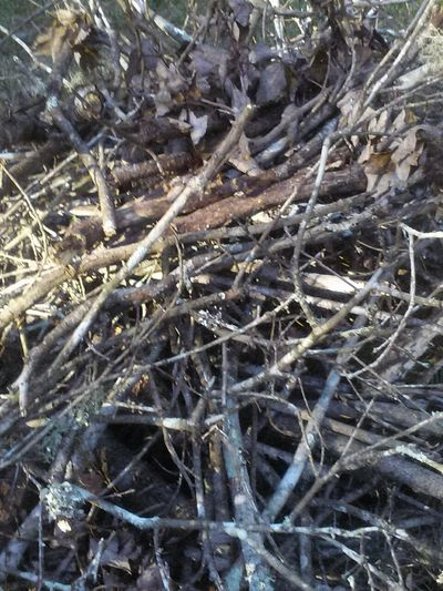 Blair Witch Project Pick Up Sticks Fall Outdoors Brown Burn Pile P Enjoy The New Normal Sticks Out In The Sticks Dead Nature End Of The Road