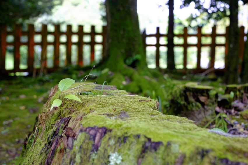 香取神宮/Katori Jingu Shrine Fujifilm Fujifilm X-E2 Fujifilm_xseries Japan Japan Photography Katori Jinguu Shrine Shrine Of Japan 寺社仏閣 神社 香取市 香取神宮