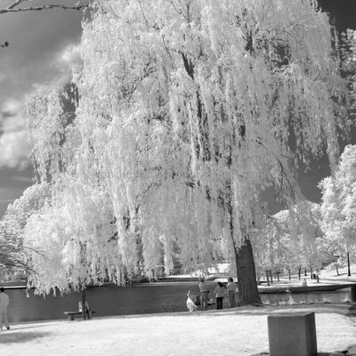 IMG_2407 by polishamericanphotographer on Flickr. Just follow this link to see and comment on this photo: https://flic.kr/p/t8qRh6 Cleaveland CLE  Cleveland ClevelandOhio1796 Ohio UniversityCircle WadeLagoon CuyahogaCounty EastSide Water Beautifulohio Blackandwhite Blacknwhite Infrared CanonG11 InfraredCanonG11 Canon TeamCanon Digitalcamera Digitalphotography Digitalphoto PointNShot PointandShot Powershot ThisisCLE