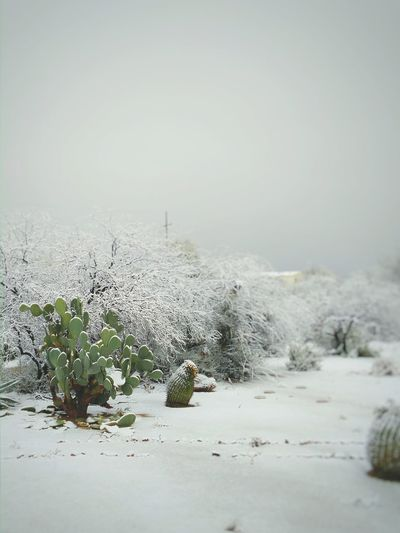 Winter in AZ Photographic Memory Capture The Moment Winter