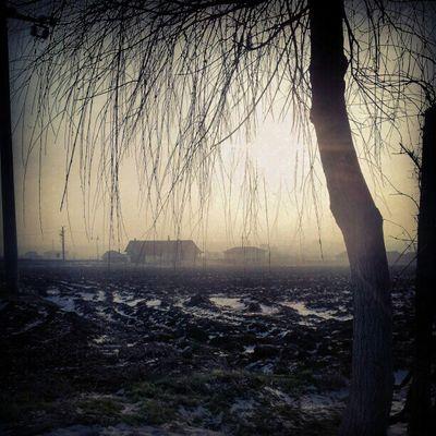 Morning Morning Light Morning Mist Winter Winterscapes
