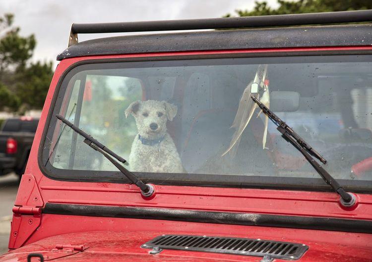 Dog in car seen through car windshield