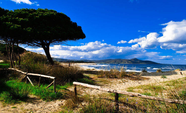 Beach Beauty In Nature Blue Cloud - Sky Day Grass Horizon Over Water Nature No People Outdoors Sand Scenics Sea Sky Tranquil Scene Tranquility Travel Destinations Tree Water
