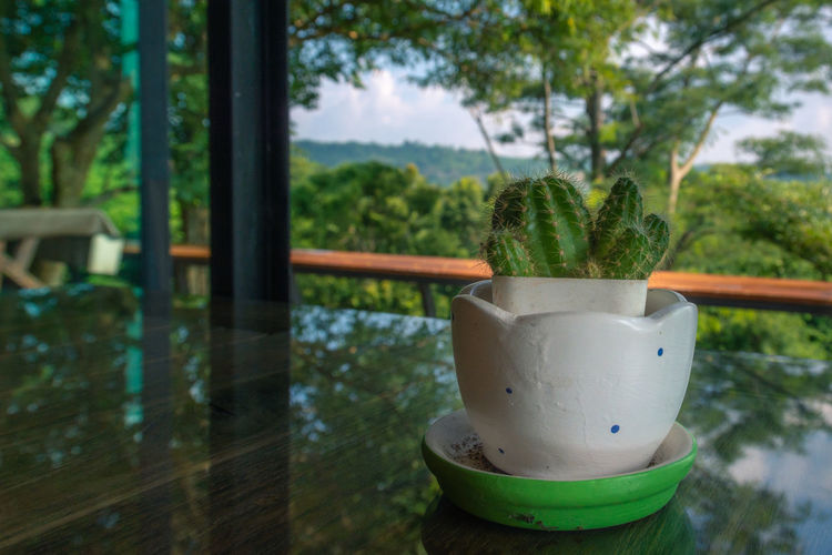 Cactus Close-up Day Flower Pot Focus On Foreground Green Color Growth Houseplant Nature No People Outdoors Plant Potted Plant Succulent Plant Table Tree Water Window Window Sill Wood - Material