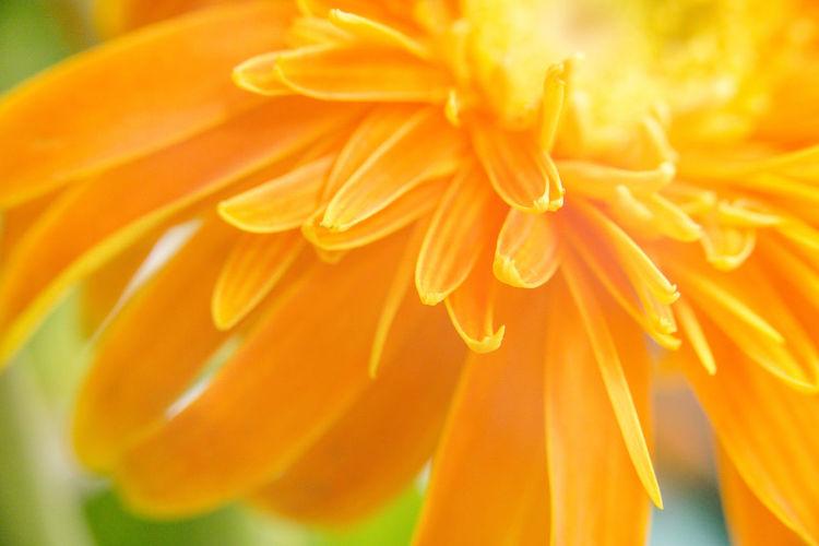 花花 Flower Head Flower Yellow Backgrounds Full Frame Beauty Textile Close-up