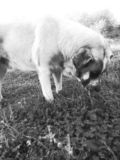 BOBY......... Taking Photos Animals Monochrom Dog My Dog Lovely Dog Beautiful