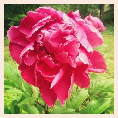 In my backyard! Badcam Nojustice Pretty Flower photooftheday
