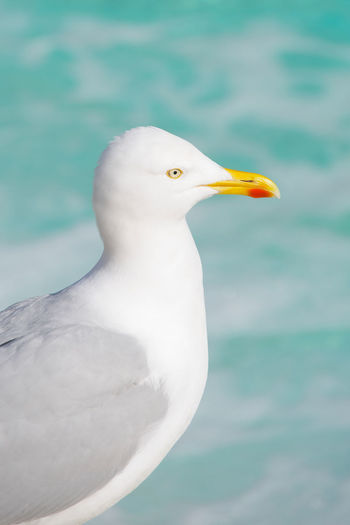 Close-up of seagull against sea