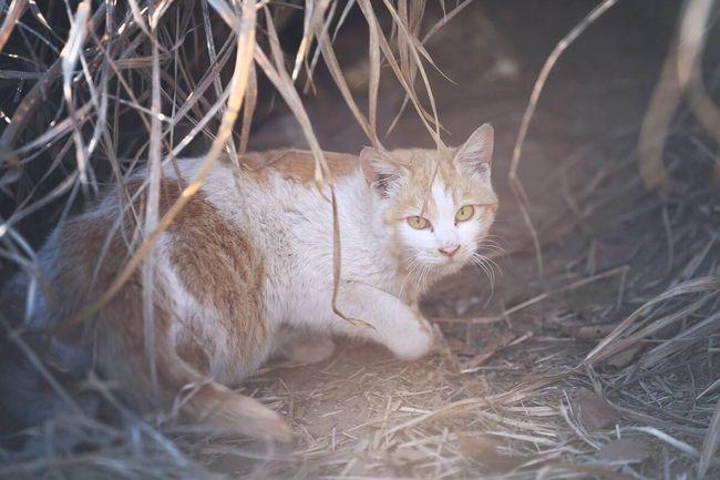 Cat Streetcat Feralcat 이 녀석은 아직 이름이 없는 길고양이입니다.