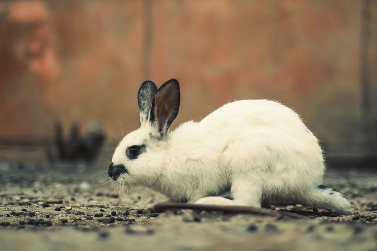 Rabbit Taking Photos Streetphotography Street Photography Animal_collection Check This Out Cute Zenitar The Photojournalist - 2015 EyeEm Awards The Street Photographer - 2015 EyeEm Awards