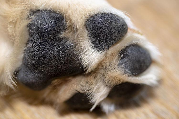 Close-up of animal sleeping