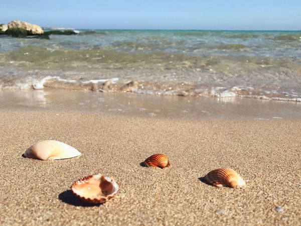 Marina Di Melilli Beach Sea Sand Shore Nature Water Beauty In Nature Seashell Tranquility Outdoors Horizon Over Water Day No People Tranquil Scene Scenics Close-up Sea Life Shell Shells Shells🐚 Sea View Sea And Sky Tranquility Nature