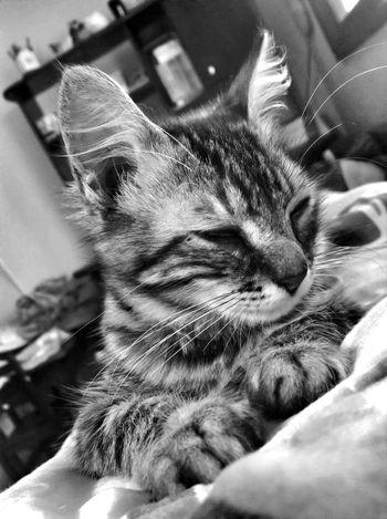 "Imma sick, please sing me ""soft kitty""? Bw_collection Eye4black&white  Animals Eye4photography"