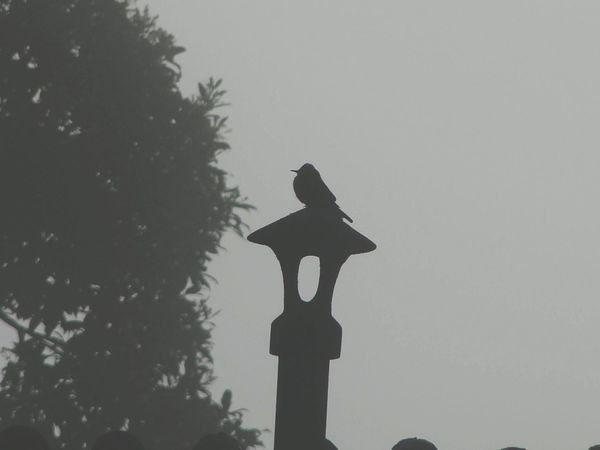 Silhouette BirdSilhouette Foggy Day Foggy Foggy Morning Bird Photography Bird Birds Of EyeEm  Chimney Chimneys &beautiful Skys  Chimney Nevoeiro Passaro Pássaro 🐦 Passarinho Chamine Sky Sky Bird Nature Natureza