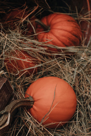 Fresh orange pumpkins in the hay at the farmer's market.  halloween and thanksgiving.