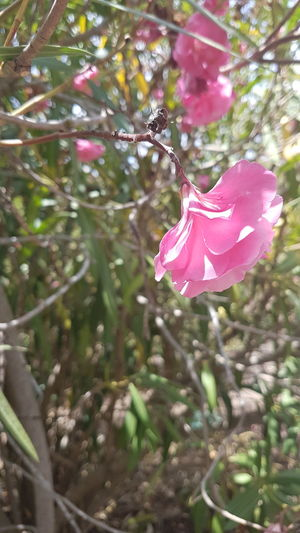 Pink Color Nature No People Outdoors Fragility Branch Beauty In Nature Close-up Flower