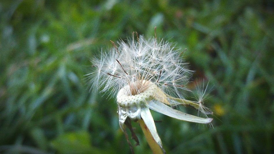 Autumn Flower Grass Lonely First Eyeem Photo Check This Out Taking Photos Relaxing