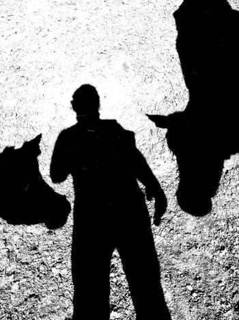Silhouette Shadow Cows Farm Farm Life Cows!!! Coworkers Cows🐮 Cowfarm Outdoors Animals One Person Only Men One Man Only Standing People Adults Only Men Adult Day Human Hand Human Body Part Lifestyles