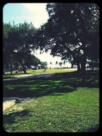 Trees Park Shade