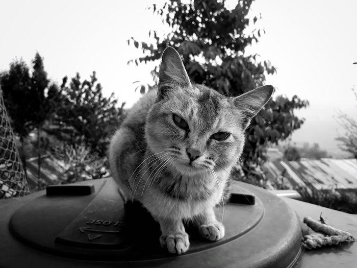 Close-up of cat looking at the camera