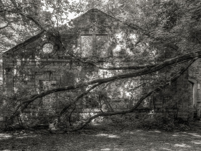 Derelict Architecture Black And White Blackandwhite Photography Branch Building Building Exterior Built Structure Derelict Building Forest History House Nature No People Old Buildings Old House Old Ruin Outdoors Plant Ruin Ruins Architecture Tranquility Tree Windows
