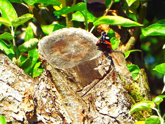 Insect Animals In The Wild One Animal Animal Themes Wildlife Tree Nature Day Tree Trunk Animal Wildlife Wood - Material Close-up Outdoors No People Beauty In Nature Ladybug Butterfly The Week On EyeEm