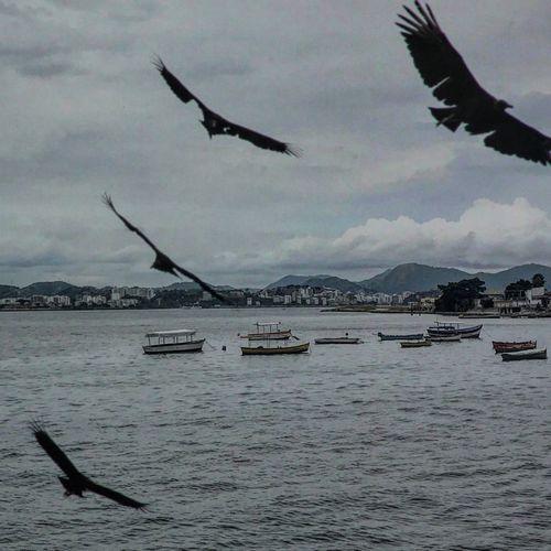 Water Nature Lake Bird Mountain Flying Sky