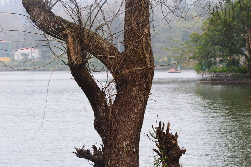 River and tree