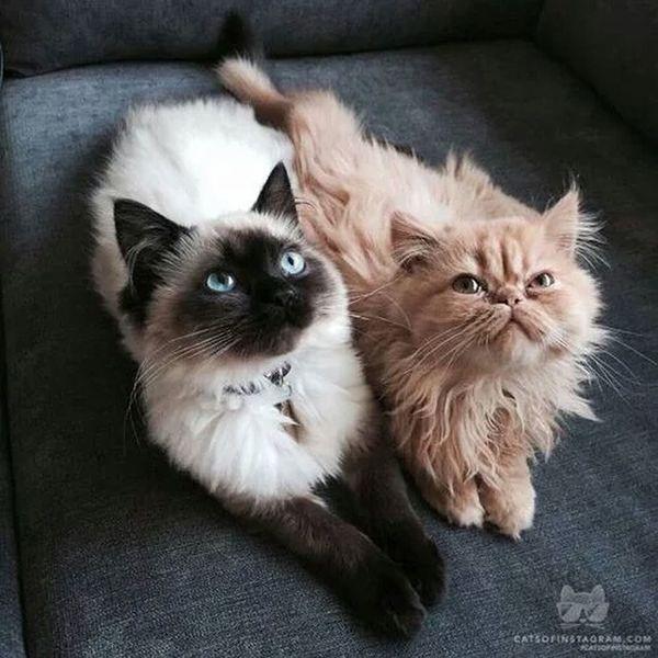 Kedi Aşkı masumiyet sevgi