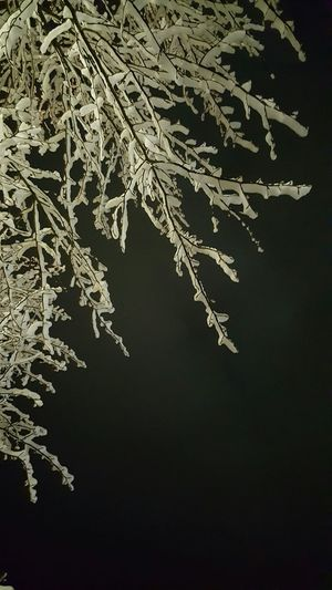 Nature No People Tree Close-up Night Trees Snow EyeEm Best Shots Sky Outdoors Park Park - Man Made Space Outside Nature Overhead View Trees And Sky Tree Branches Tree Branches Against The Sky Tree Branches With No Leaves Snowy Trees Snowy Scene Snowy Night Snow Covered Snowy Tree Snowy Branches