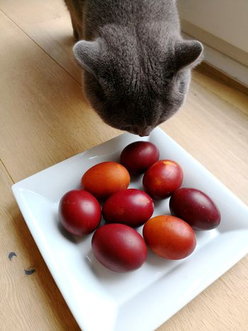 Cat looking for Easter eggs British Shorthair Cat Eggs Easter Eggs Easter Eggs On Display Easter Egg Hunt Cat British Shorthair Cat Dyed Easter Eggs EyeEm Selects Red Table Wood - Material High Angle View Close-up Sweet Food Food And Drink Served