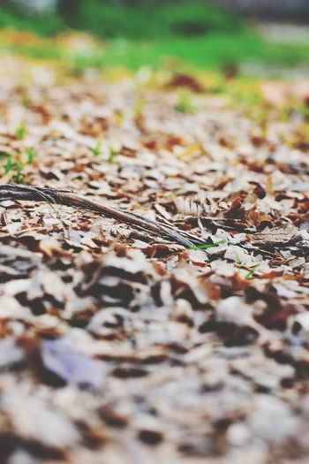 EyeEm Selects Leaf Autumn Road Close-up Grass Leaves Fall Maple Leaf Fallen Leaf Autumn Collection Maple Tree