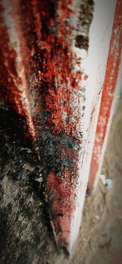 NOTICE THE LITTLE CREATURES Ant Hole Cracks In The Wall Red Wall Wall Ants Water Red Road Close-up
