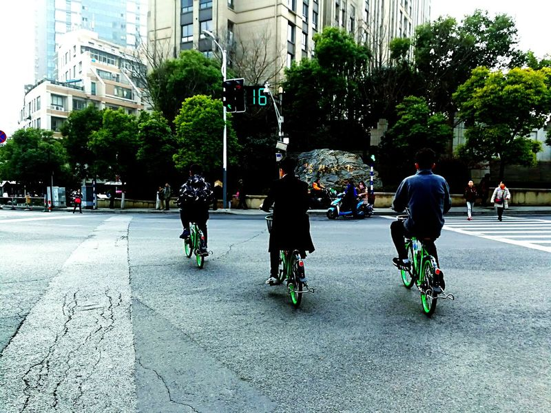 Bicycle Transportation Cycling Built Structure Architecture City Life Tree