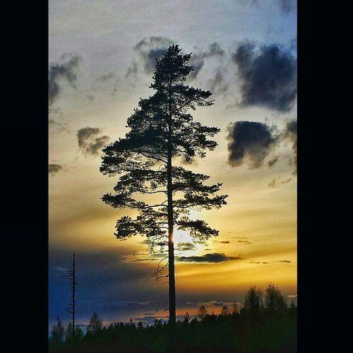 Kvällspromenad Var Dalarna Skyporn